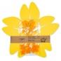 """Tischdeko-Set """"Blüten"""", Farbe: gelb/orange"""