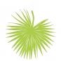 """Papier-Deko """" Palmblatt"""", Farbe: hellgrün"""